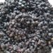 Elderberry Syrup Basic Recipe